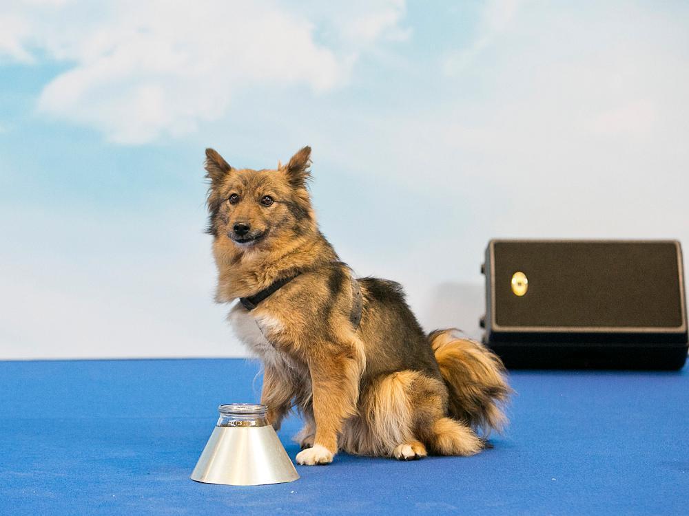 Аэрофлот зарегистрировал ипрезентовал ваэропорту Шереметьево породную новую группу служебных собак— шалайка